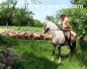 Rando de 4 jours a cheval vers Rocamadour!