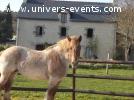séjours autour de la relation au cheval et créativité